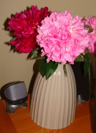 Peonies picture 4